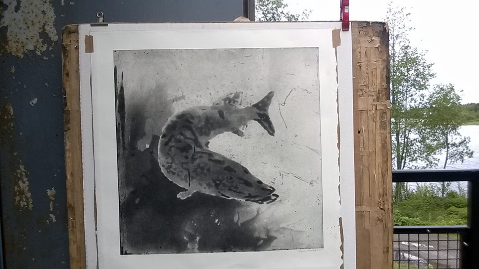 Hauki on kala, 2014. Spit bite/aquatint.