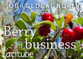 Berry business brings the globalisation to Lapland's forest: Read more in Latitude – University of Lapland Magazine 2010